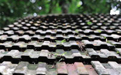 Dachreinigung – So beseitigen Sie Algen, Flechten und Moos auf Ihrem Dach