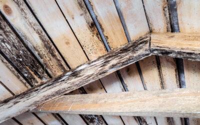 Schimmel im Dach Teil1/2 – Was hat der Sommer damit zu tun?